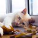 Cat-egorical Enrichment