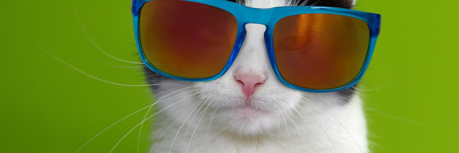 Humor Cat